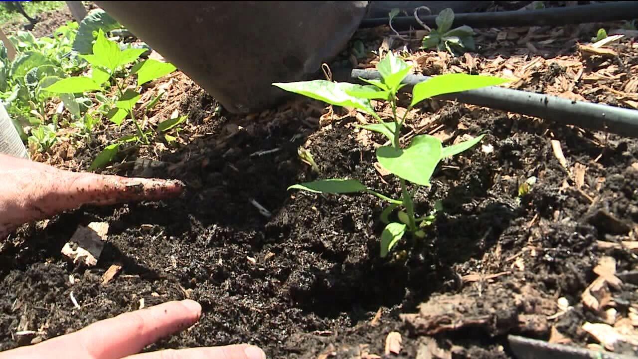 Tips for effective weedcontrol