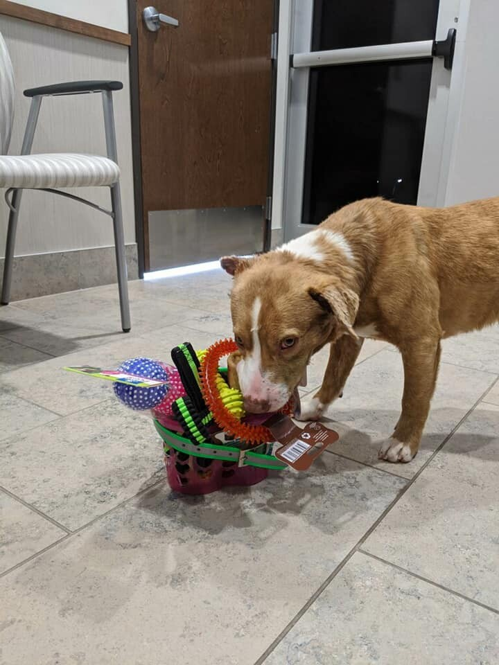 Atlas and his new toys