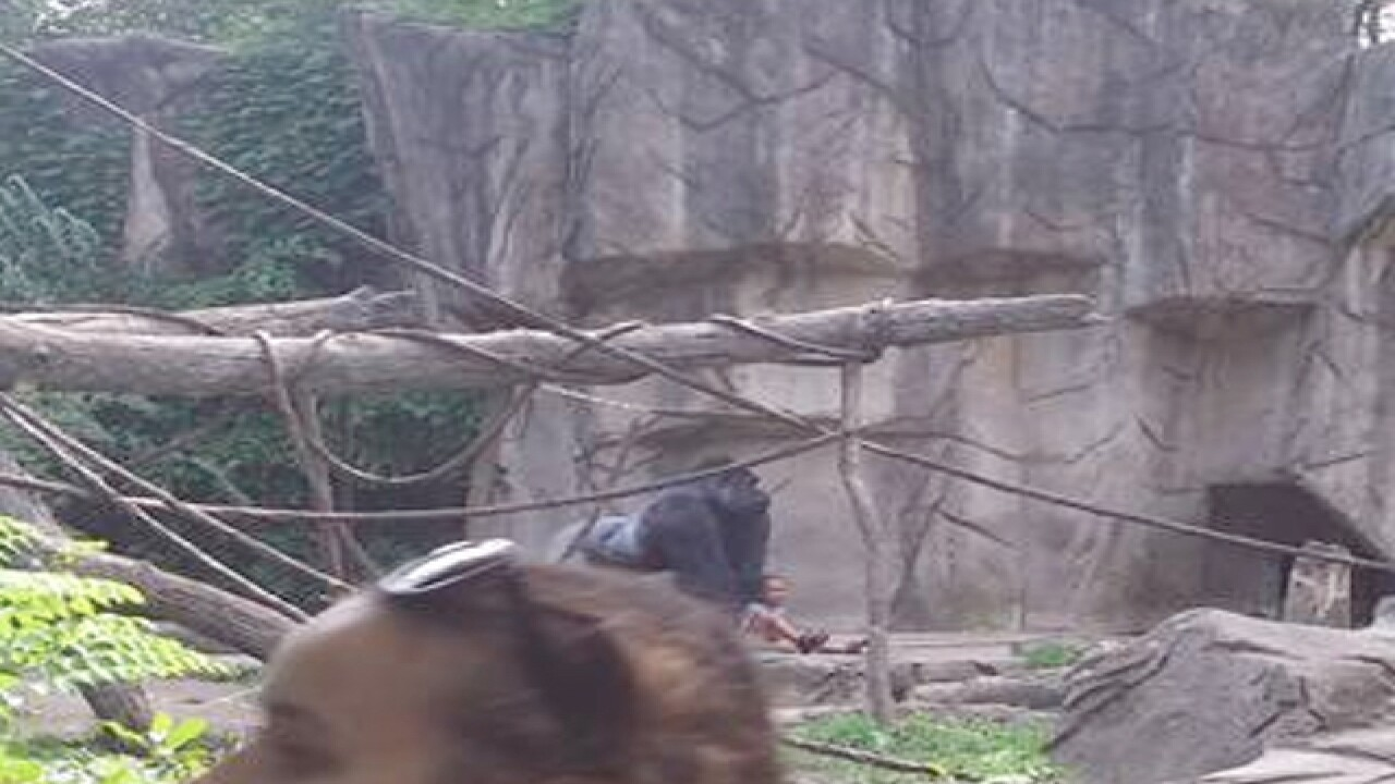 Ohio zoo kills gorilla to protect small child