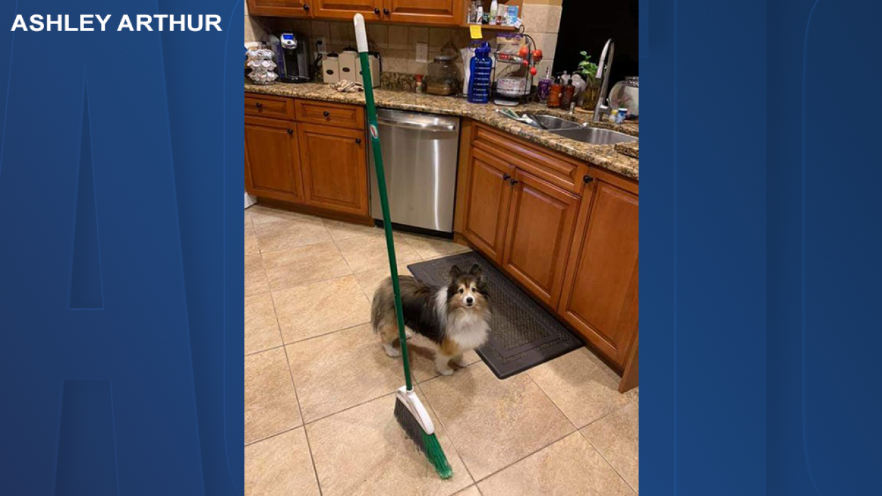 #BroomChallenge sweeping social media
