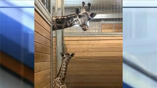 Giraffepic.jpg