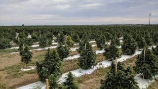 Los Suenos Farm in Pueblo