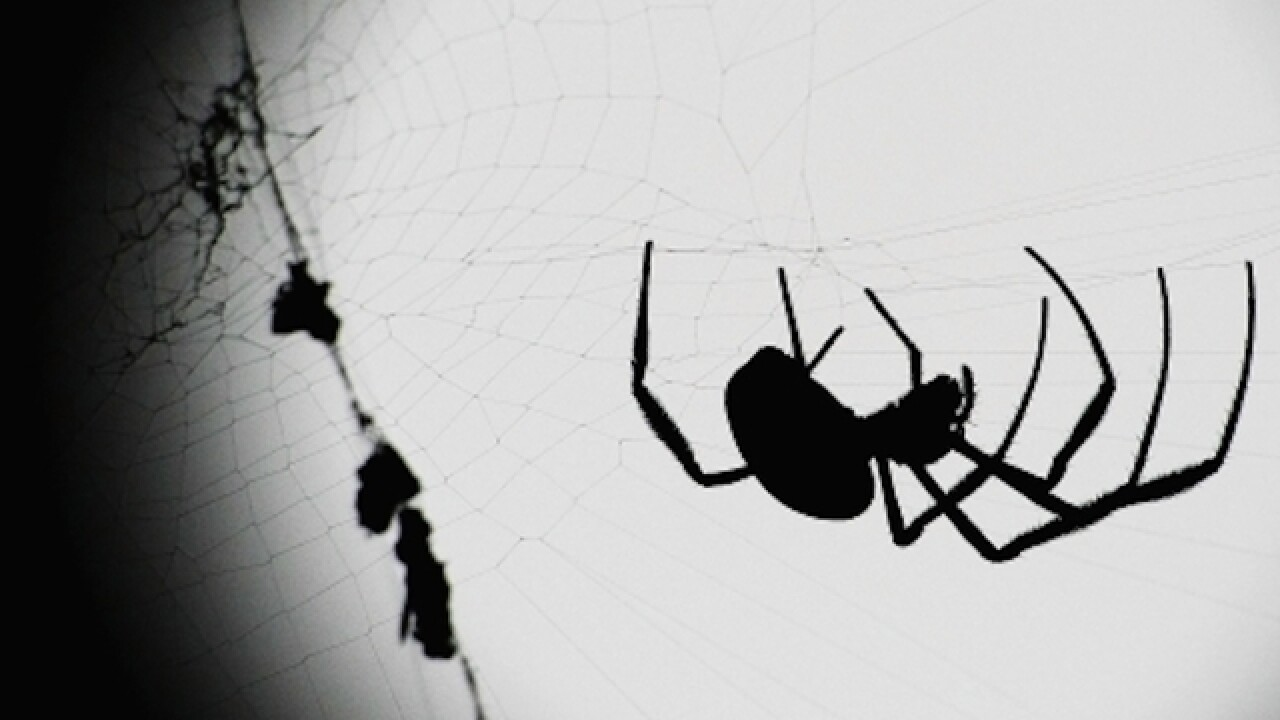 WATCH: 15 hilarious spider freak-outs