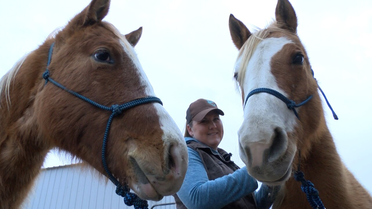 Two Horses being adopted out by Colorado Horse Rescue Network