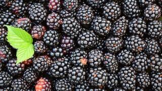 blackberries-1541320_1920.jpg