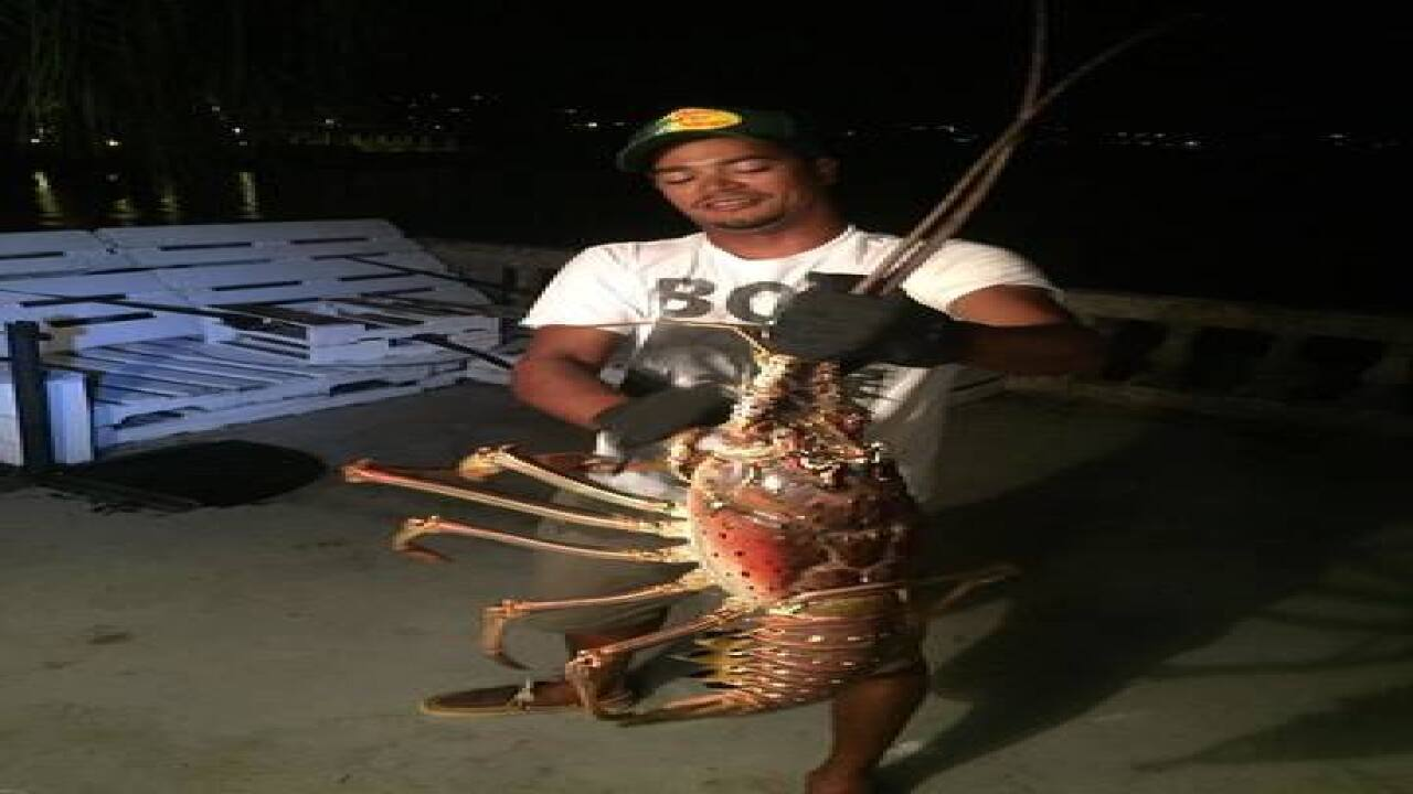 Charter boat catches, releases giant lobster off Bermuda