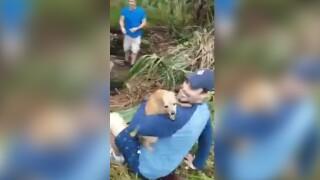 wptv-dog-reunited-owner-crash.jpg