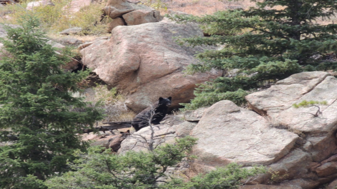 ADORABLE PICTURES: Bears at Chessman Reservoir