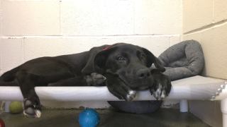 Animal rescues take part in 'happy hour' study to see how time outside shelter affects dogs