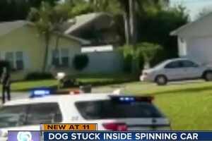 Dog stuck inside spinning car in Port St. Lucie