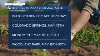 Best Time to Plant your Vegetables