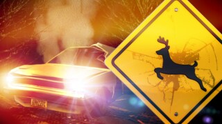 deer car crash