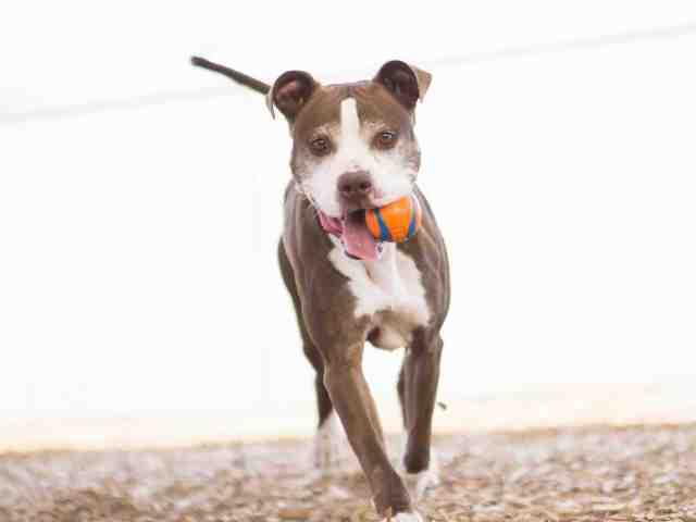 Adoptable pets from Arizona Humane Society and Maricopa County Animal Care (5/23)