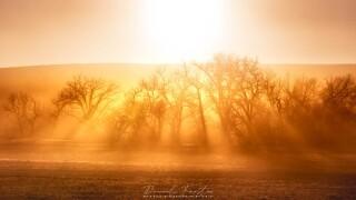 Daniel Forster golden trees