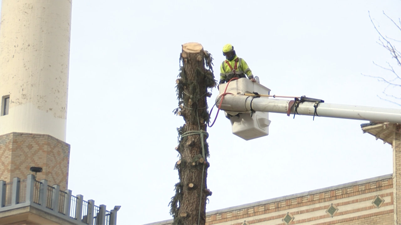 City of Helena removes second large tree at Civic Center