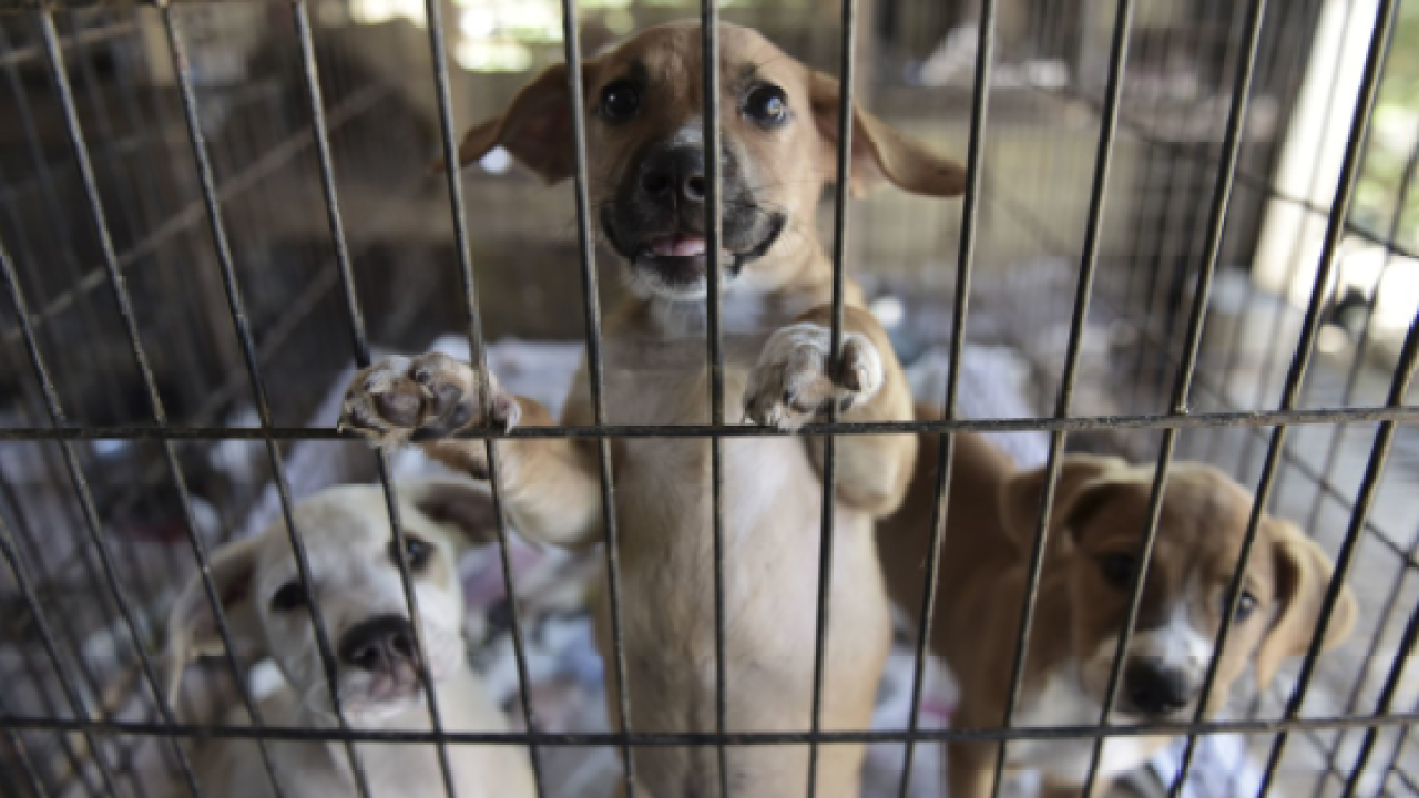 Senate unanimously passes PACT Act, which would make animal cruelty a federal felony.png