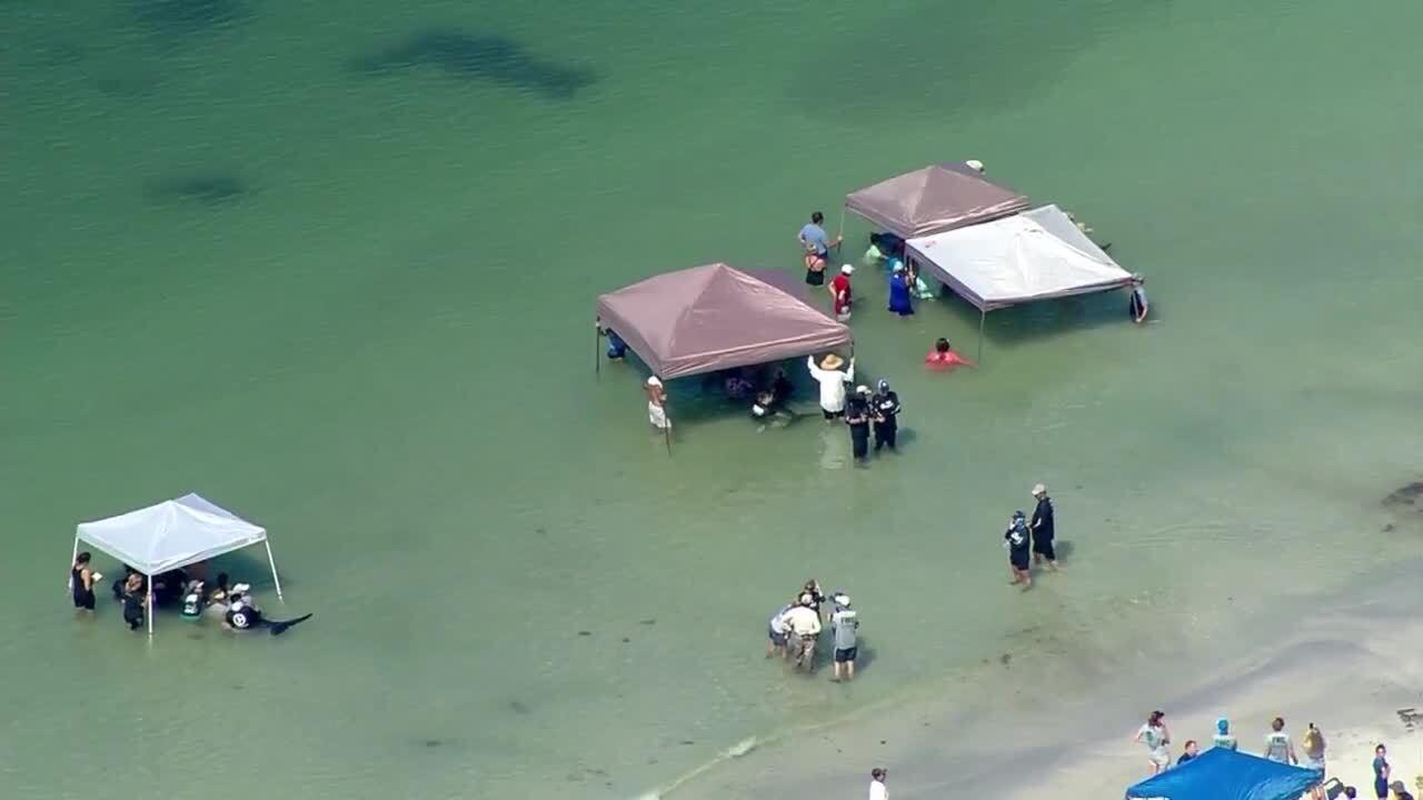 Whale rescue Redington Beach