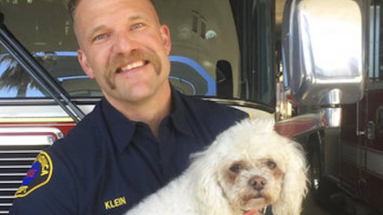 California firefighters save dog with 20 minutes of CPR