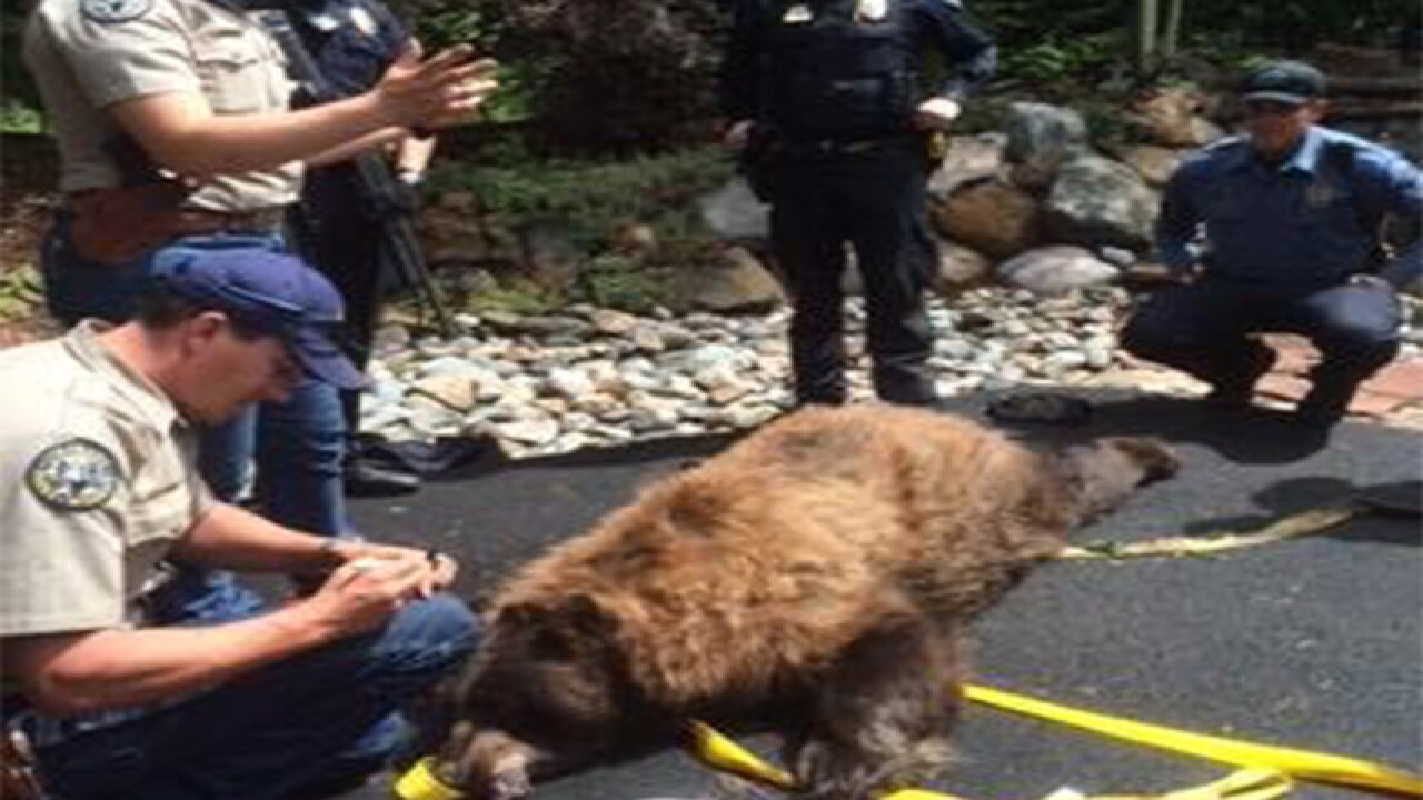 Big bear removed from underneath home's porch