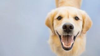 FDA warns about dog 'bone treats'