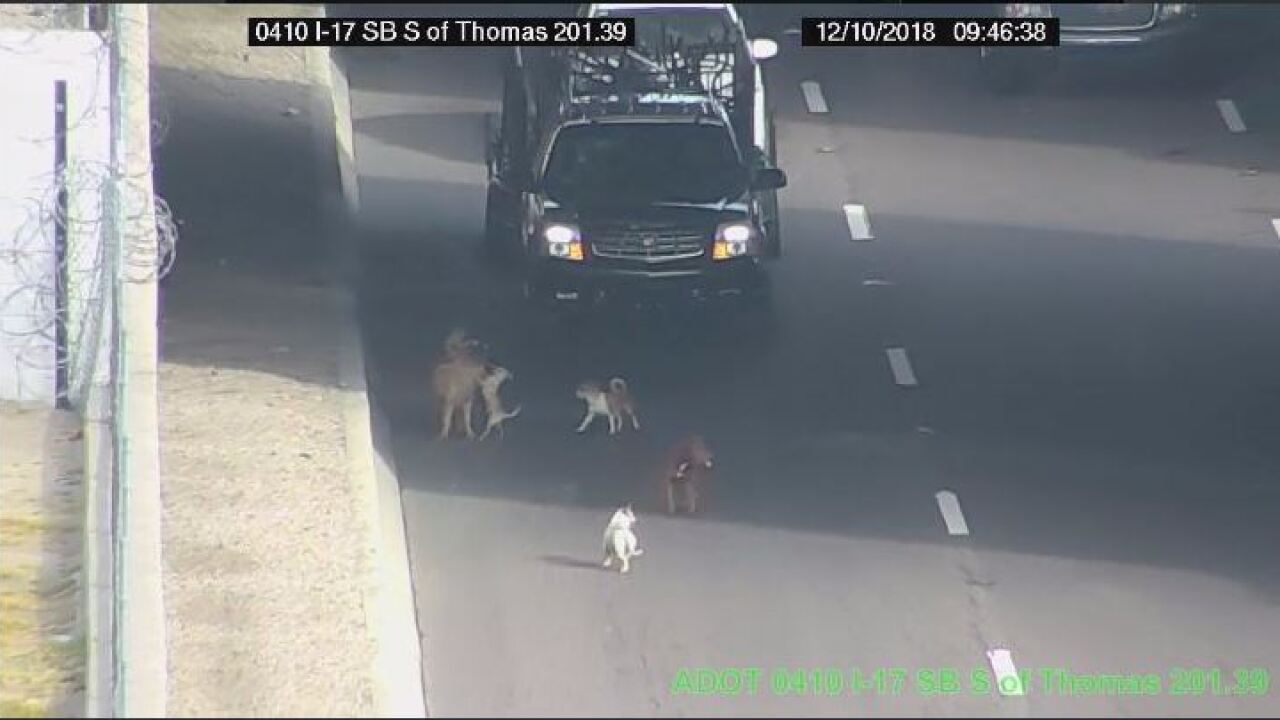 FREEWAY DOGS 2.JPG