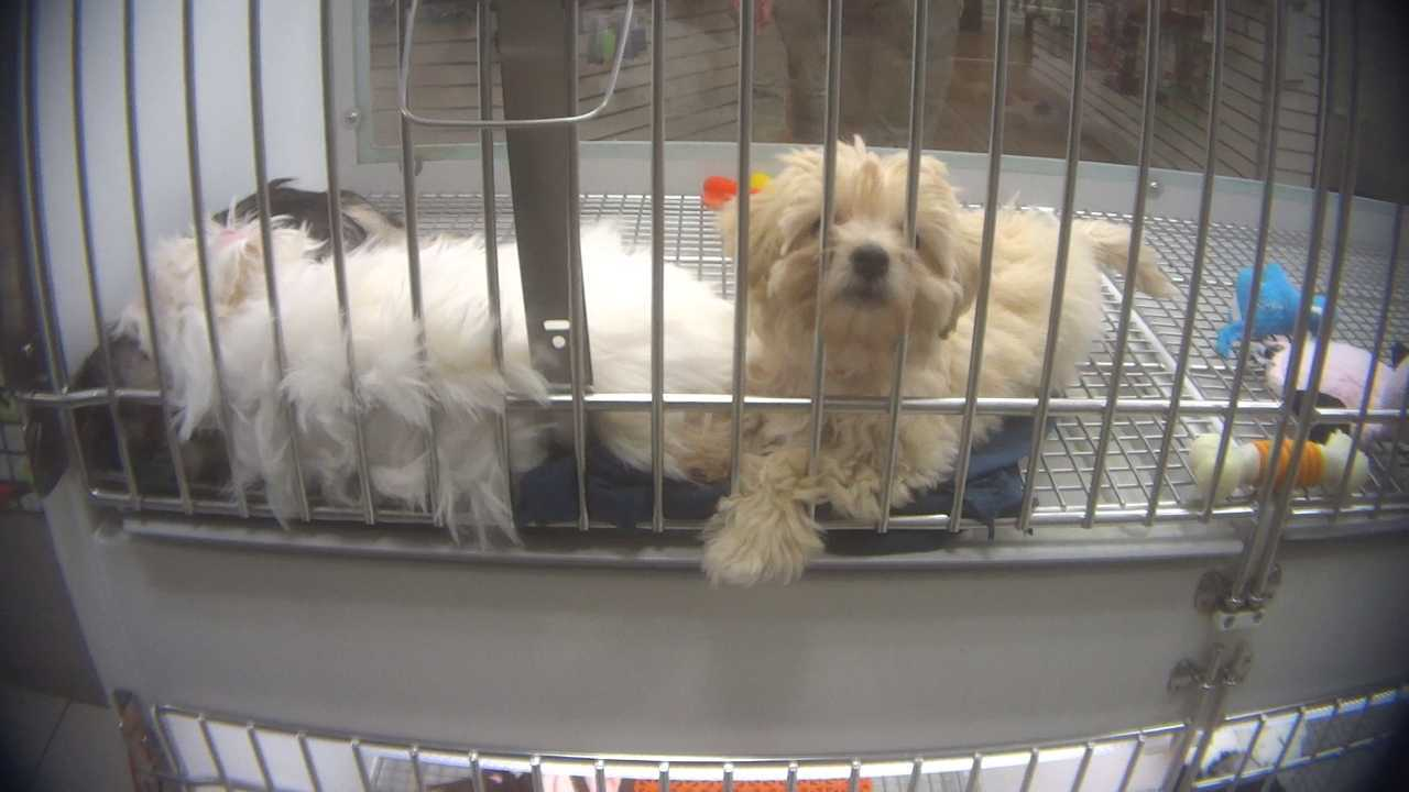 New undercover HSUS video accuses Petland chain of having