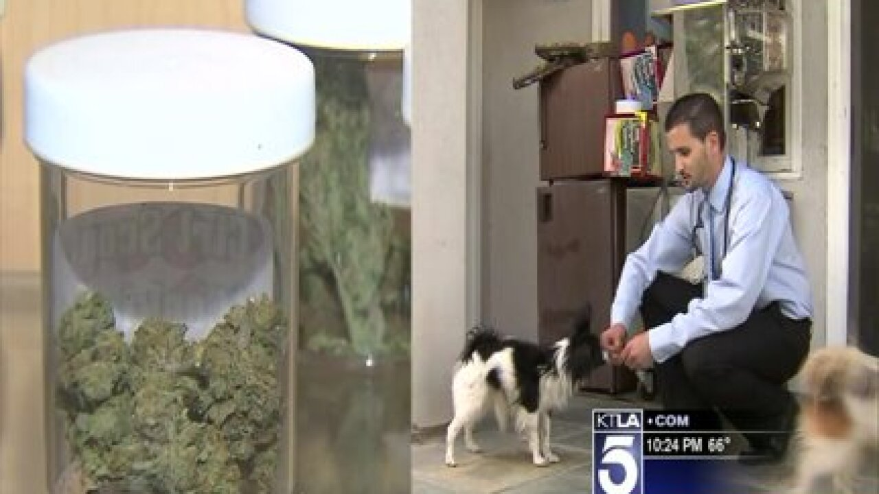 Vet recommends medicinal marijuana for pets