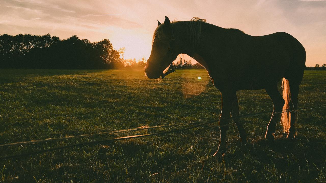 horse generic canva.png