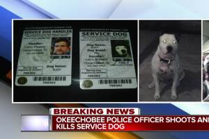 Service dog shot, killed by Okeechobee police