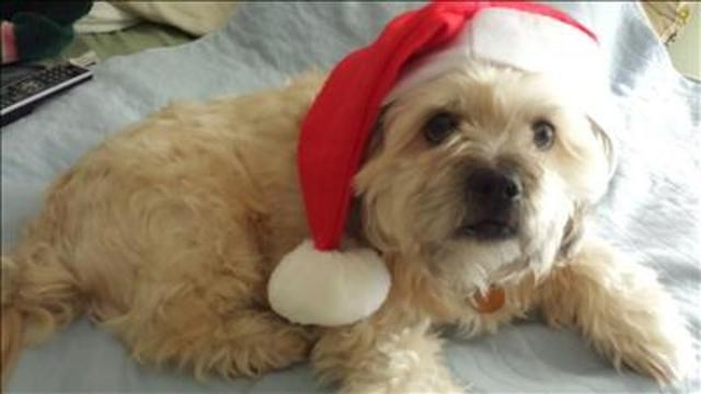 Yes! Pics: Pets with Santa