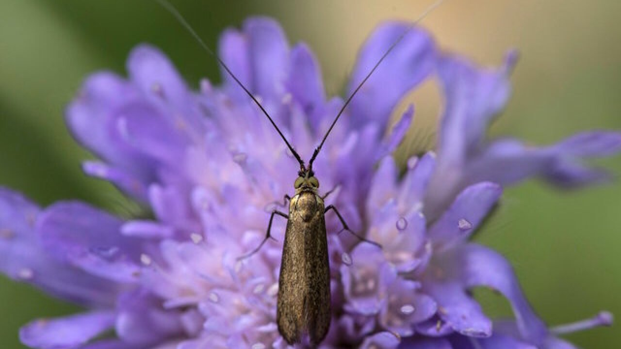 Germany's insect populations have declined by 75 percent in three decades, new study says