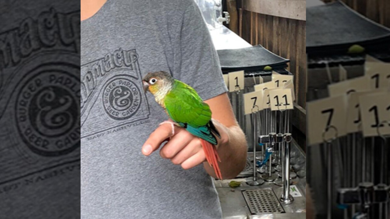 Pet Bird Finds Its Way To The Pharmacy