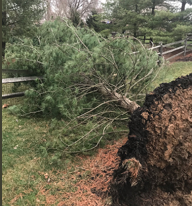 Storm_031419_Tree_uprooted_in_Anderson_by_Ryan_Johnson.png