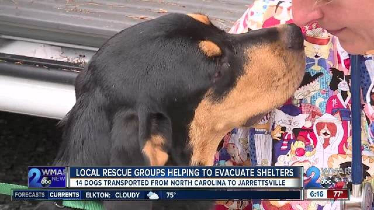Local rescue groups help to evacuate NC shelters