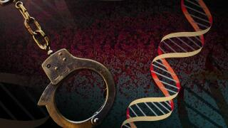 DNA Arrest