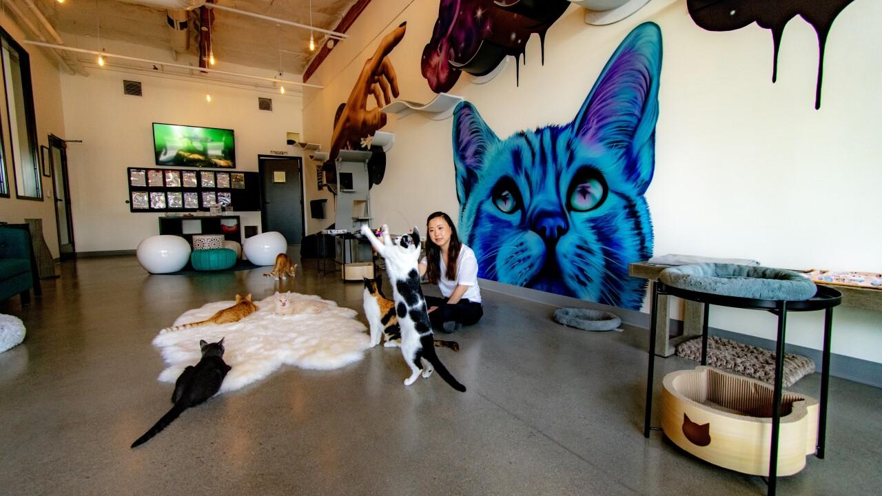 cat and craft vista cafe