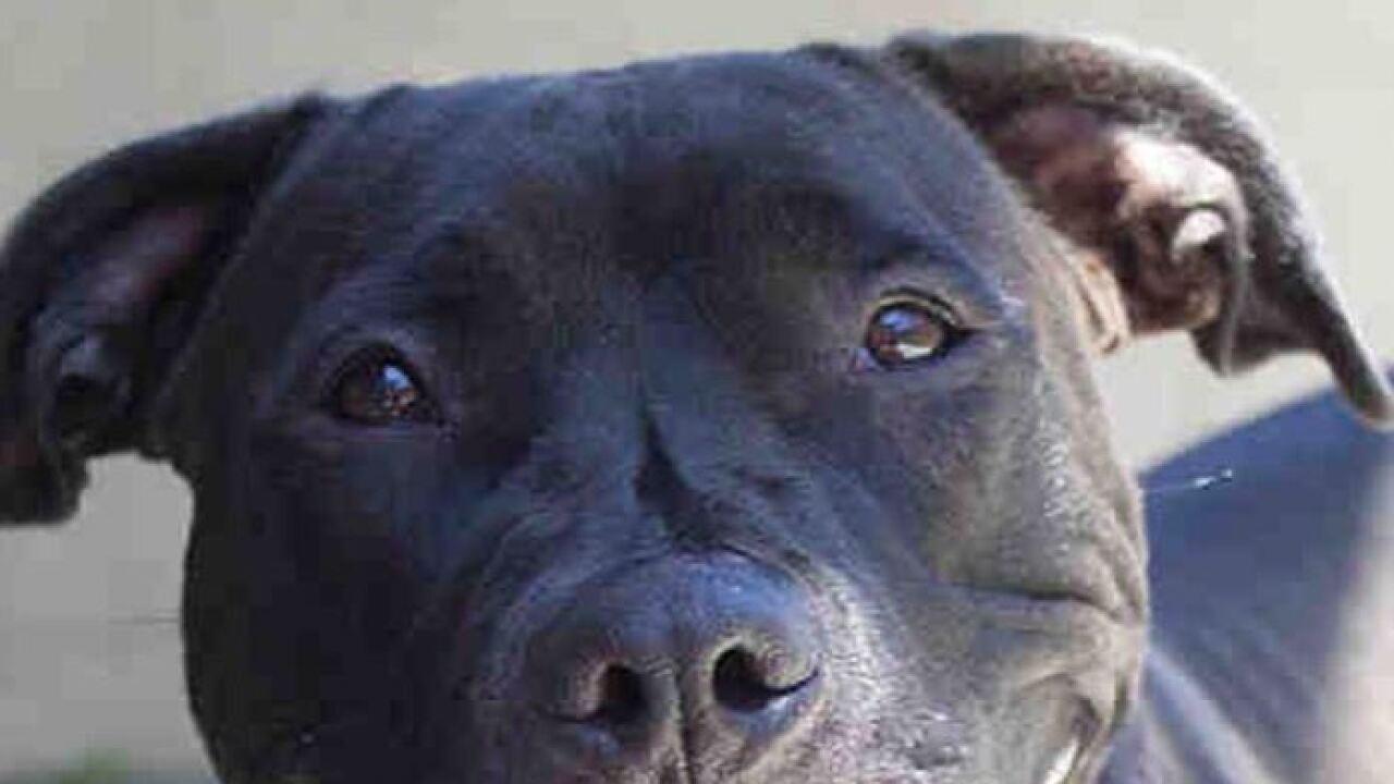 black dog day.JPG