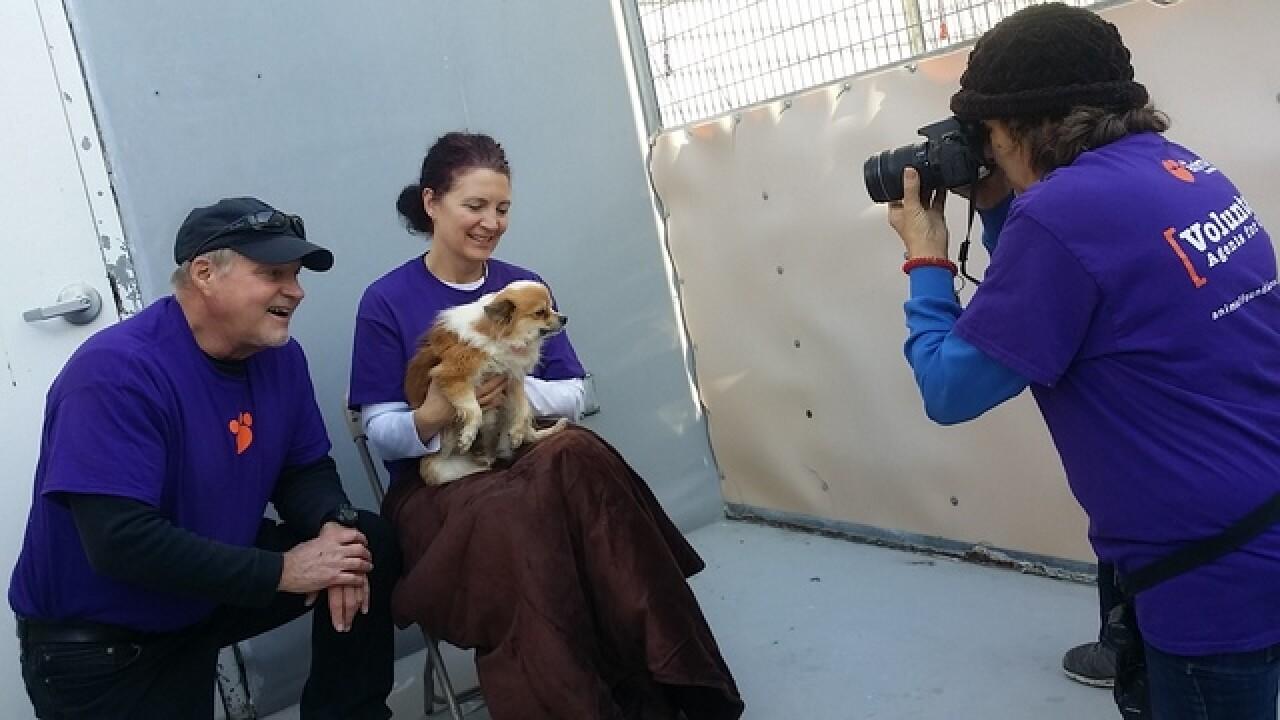 160 dogs seized in animal cruelty investigation