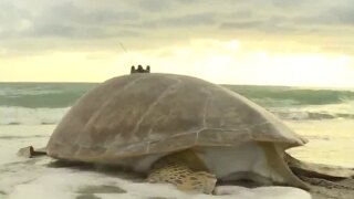 wptv-turtle-.jpg
