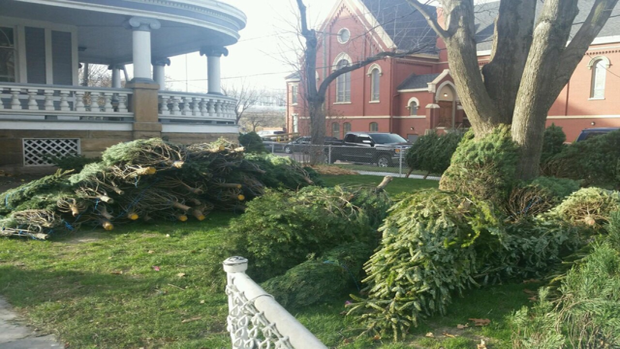 Free Christmas trees available in Cleveland