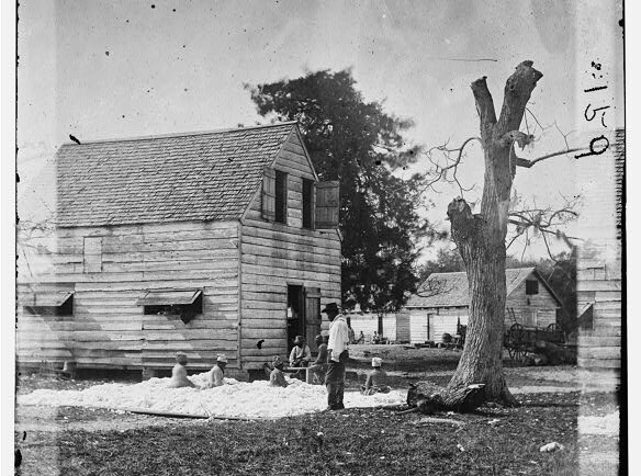 Preparing Cotton for the gin on Smith's Plantation
