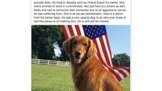 Dog that played 'Duke' in Bush's Baked Beans commercials dies