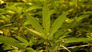 City of Chula Vista gives legal marijuana sales the green light