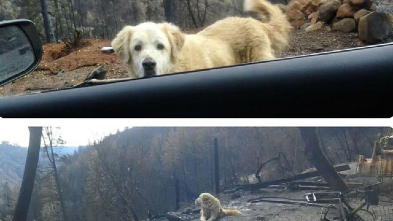 Family separated from dog in wildfires return to find him safe where home formerly stood