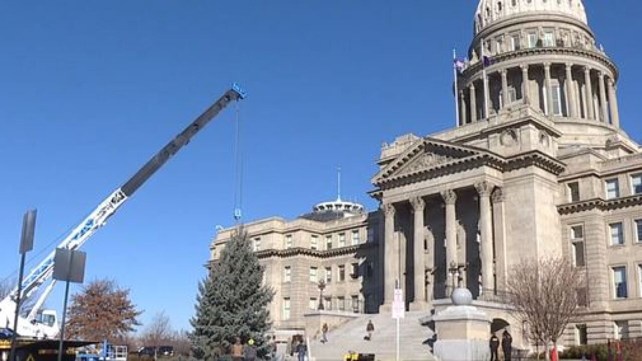 Capitol Christmas tree lit up Monday night