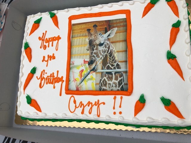 Lion Habit Ranch celebrates Ozzie the giraffe's fourth birthday