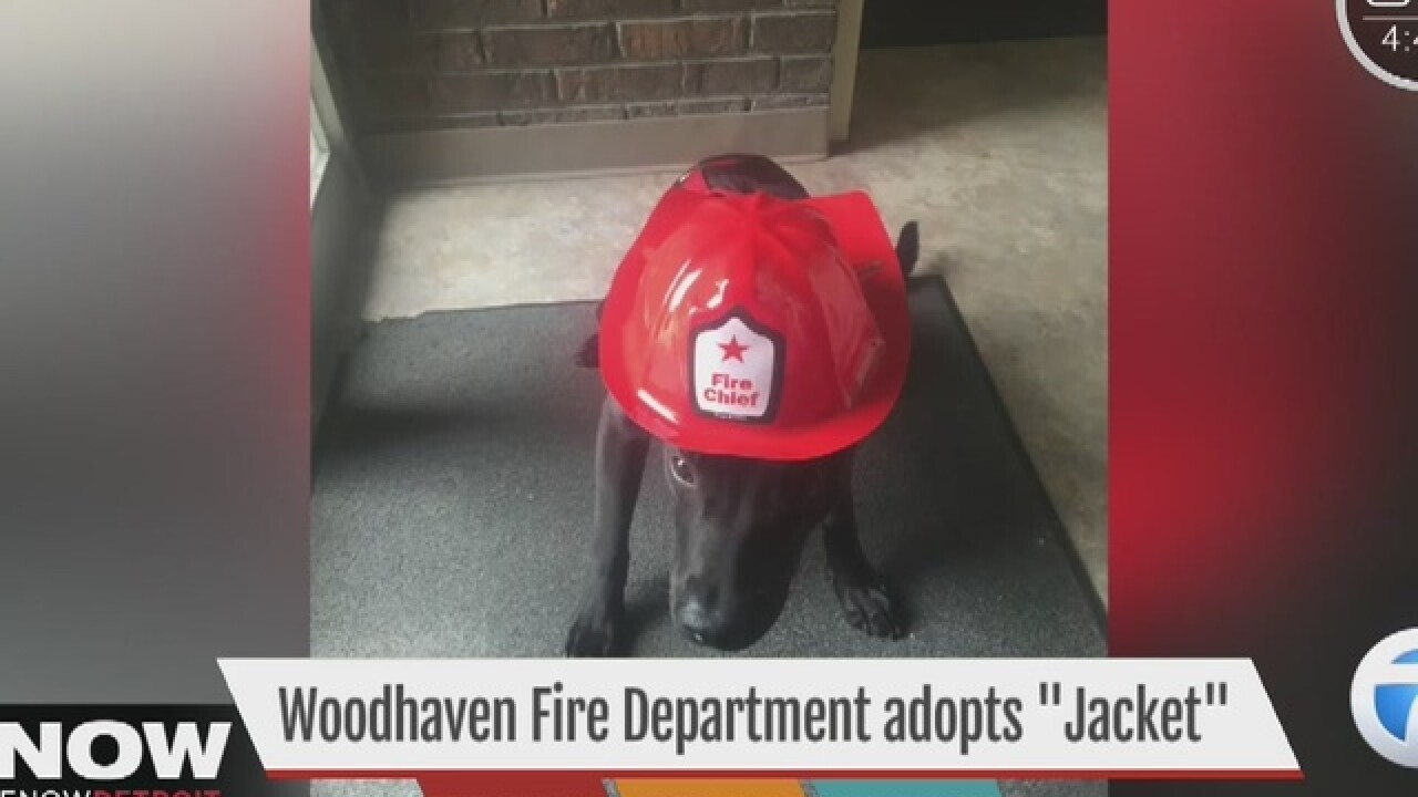 Fire station adopts dog from local shelter