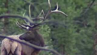 This Week in Fish and Wildlife: Opportunities to hunt in MT