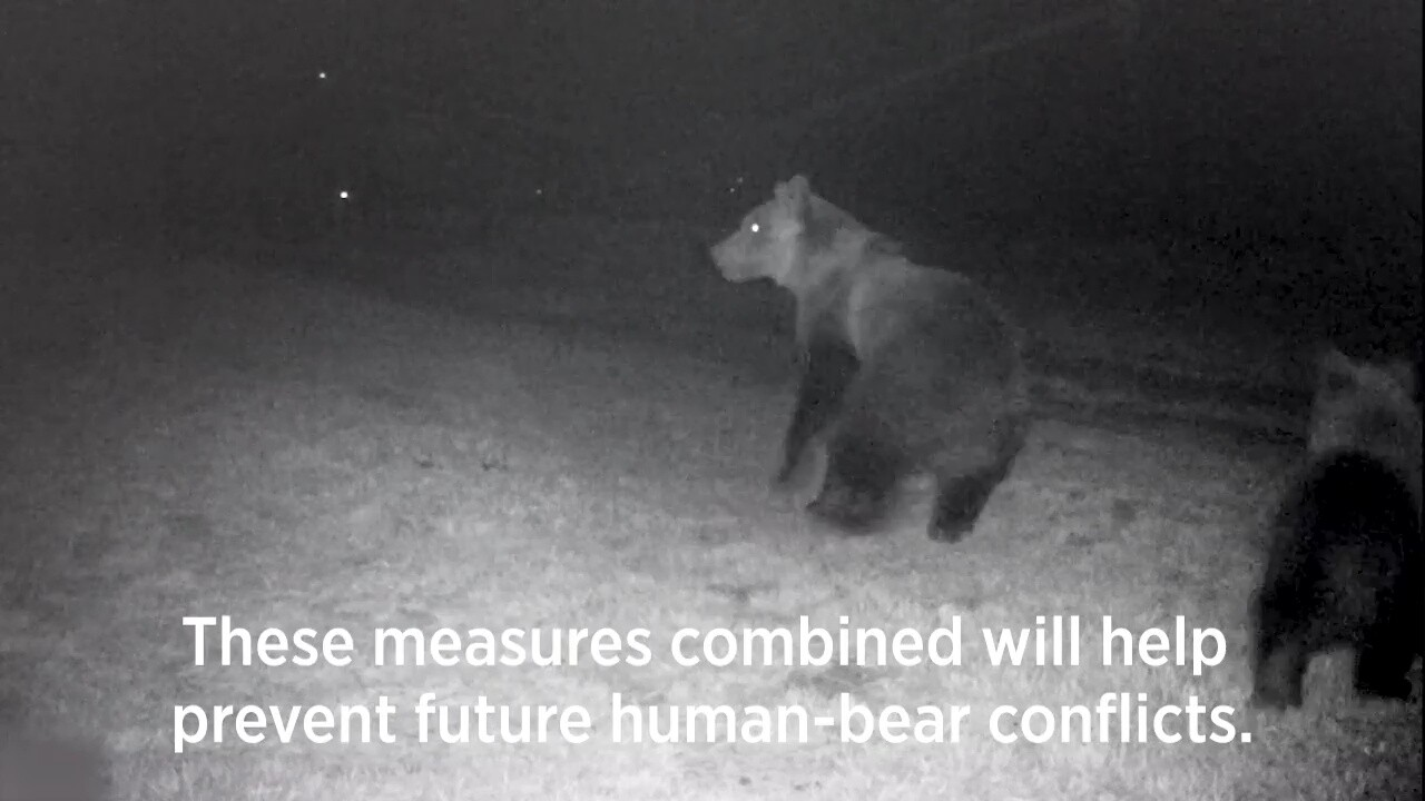 Lights and sirens deter foraging bears near homes (video)