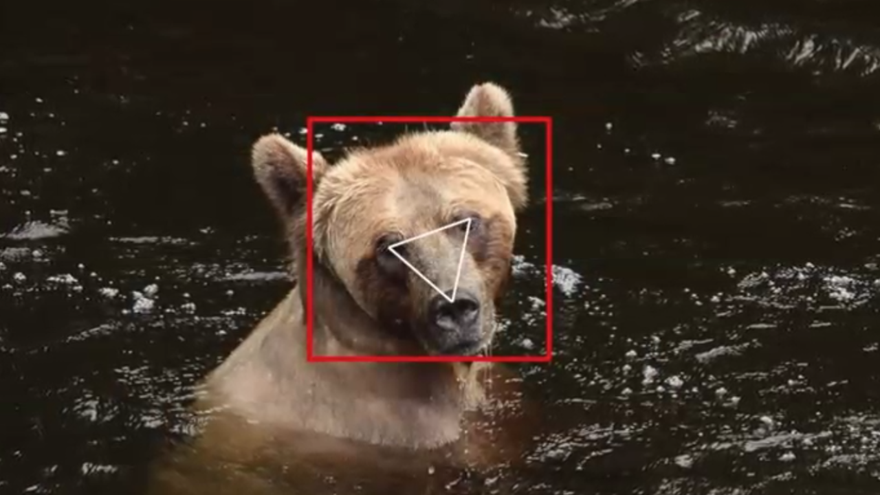 Grizzly Bear Facial Recognition
